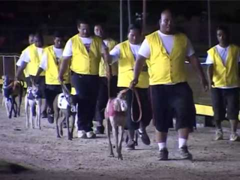 Greyhound Racing Usa