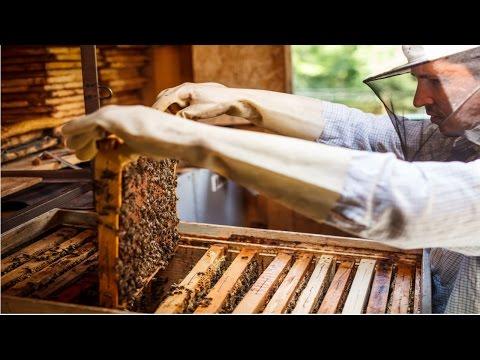 Curso Criação de Abelhas Nativas sem Ferrão - Manejo da Colmeia