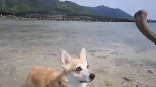 栗生海岸の海辺で水遊び。