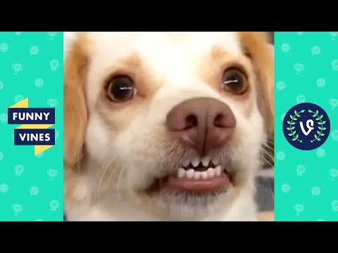 TRY NOT TO LAUGH - Cute Funny Animals of the Week