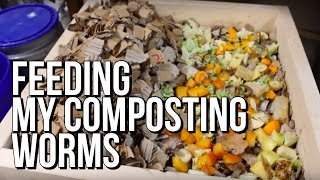 How I Feed My Composting Worm Bins