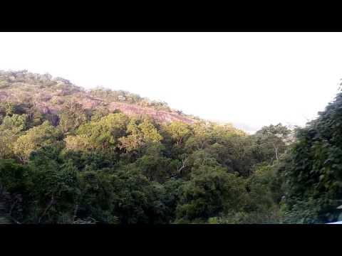 Anamalai hills the elephant hills western ghats