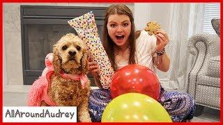 24 Hours Spoiling My Dog / AllAroundAudrey