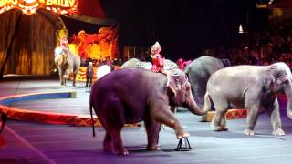 Barnum and Bailey Circus Shaolin and Elephant Act