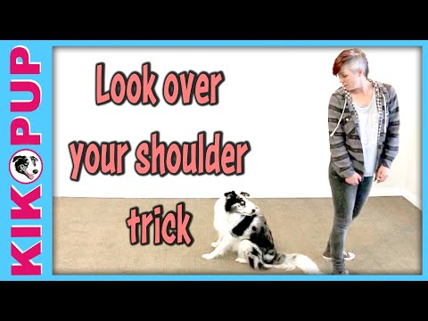 Cute easy and popular trick to train - dog clicker training