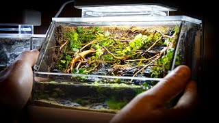 mini-complete-paludarium-with-waterfalls