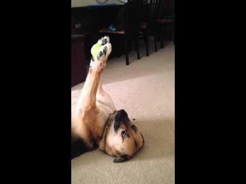 Dog shows off unbelievable ball handling skills