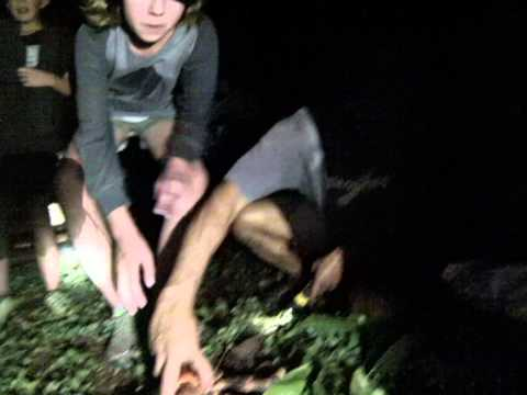 Sam edmonds niue crab video