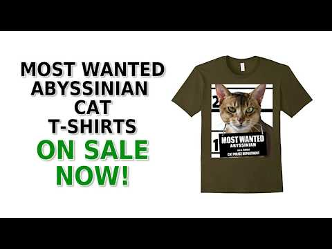 Most Wanted Abyssinian Cat Cute Funny T-Shirt - Men's, Women's, Kid's - Black, Olive, White