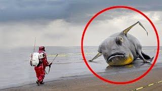 10 STRANGEST Animals That Are Hard To Believe Are REAL!