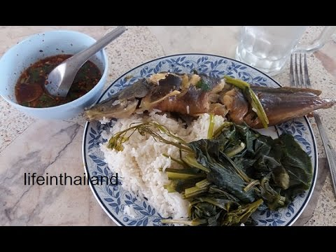 Catfish (Clarias batrachus) Farm Update 16, First harvest and lunch with the farmer.