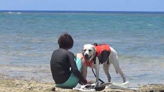 沖縄 3日目は 離島の水納島に行ってきました! パートくんは だいぶ泳...