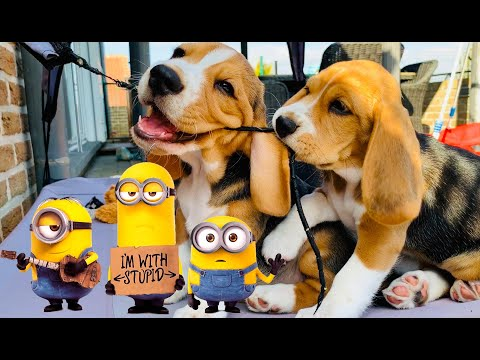 MINION MEETS PUPPIES FOR THE FIRST TIME