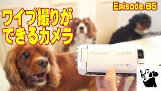 Panasonic HC-W580Mでワイプ撮りしてみた デジタルハイビジョンビデオカメラ キャバリア犬 85 ハイビジョン 検索動画 23