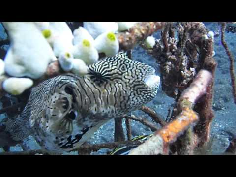 Bali (Indonesia) Amazing Underwater World - Best Spots