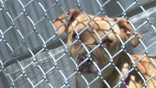 Numbers show steady decline in animals going into city shelters