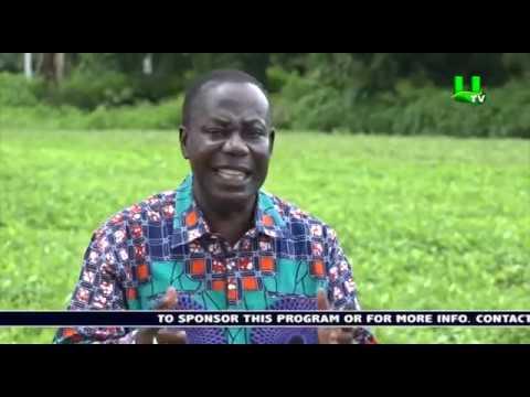 AYEKOO: Time with Dr. Seth Osei Akoto, Director of Crops, MoFA