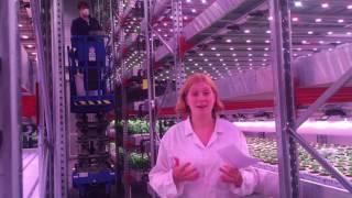 GrowUp Urban Farms - Q&A for Farmdrop's Supermarket Siesta