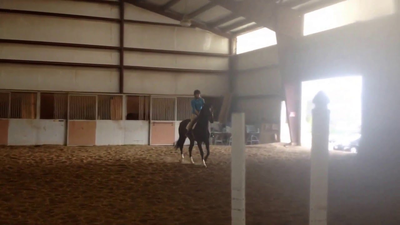 Southern Belle Riding-Horse RidingLessons, Boarding, Training