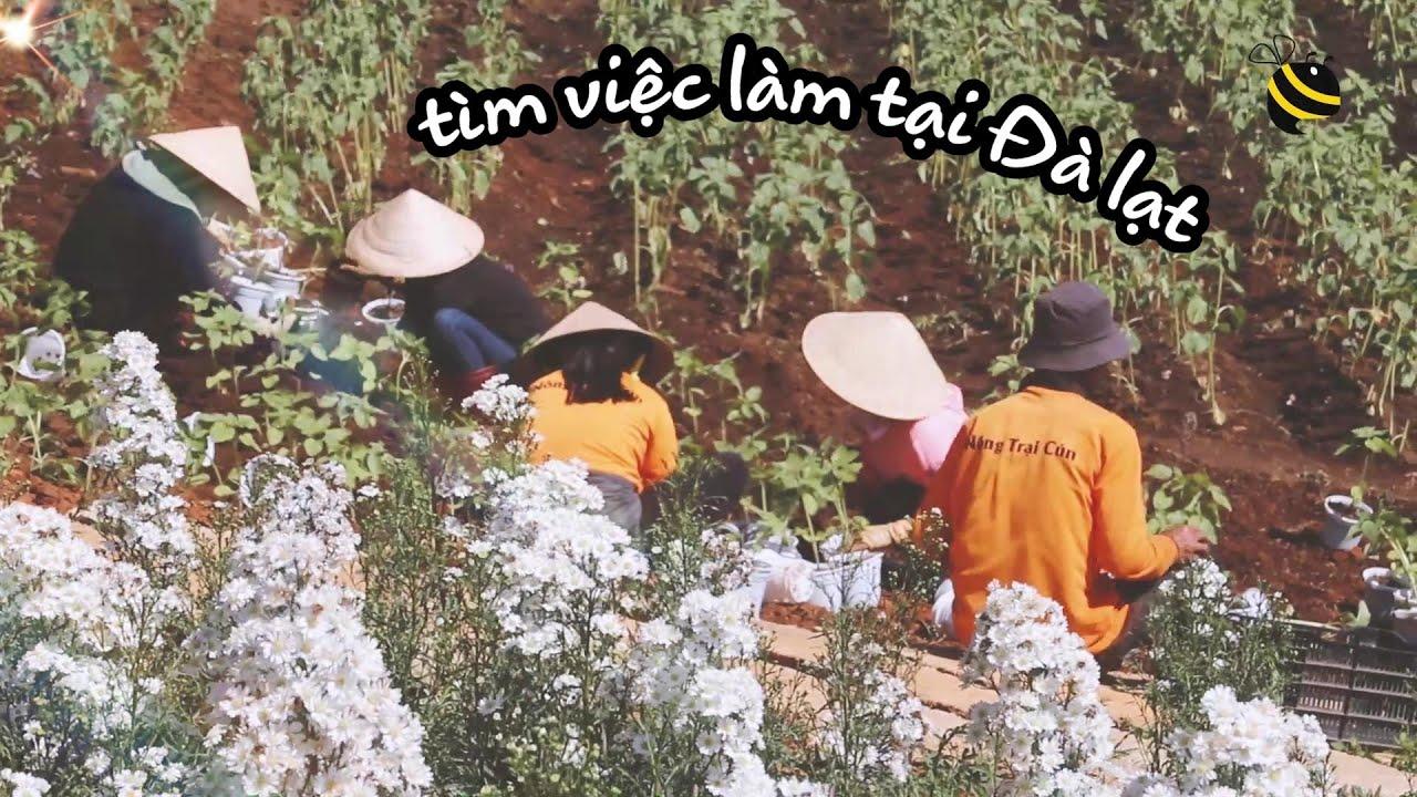 Puppy Farm Đà Lạt tuyển dụng | Cơ hội việc làm tại Đà Lạt | Trải nghiệm việc làm cùng Jobee