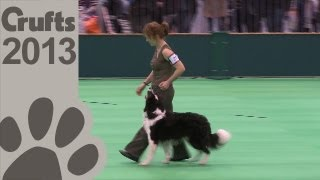Obedience Dog Championships - Day 3 - Short Highlights - Crufts 2013