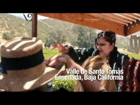 Ruta del Vino de Baja California: Experiencias Turísticas