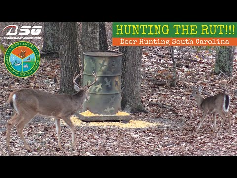 HUNTING THE RUT!!! November 2019 **Deer Hunting South Carolina** [RUT ACTIVITY] - No Harvest - VLOG