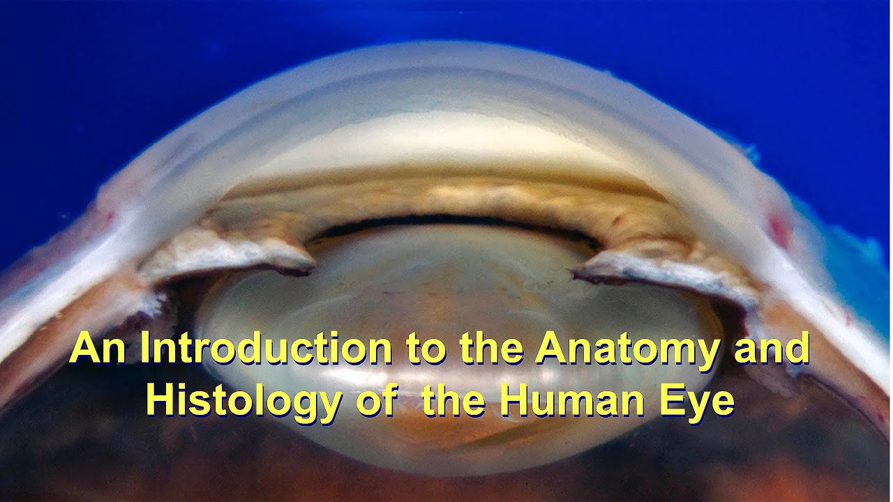 An Introduction to the Anatomy and Histology of the Human ...