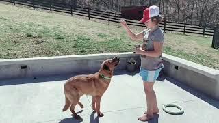 Claire & Daisy's Dog Tricks