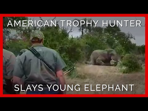 Young Elephant Gunned Down by American Trophy Hunter
