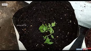 Using Coconut Fibre as a growing medium in Kitchen Gardens   Poovali   News7 Tamil