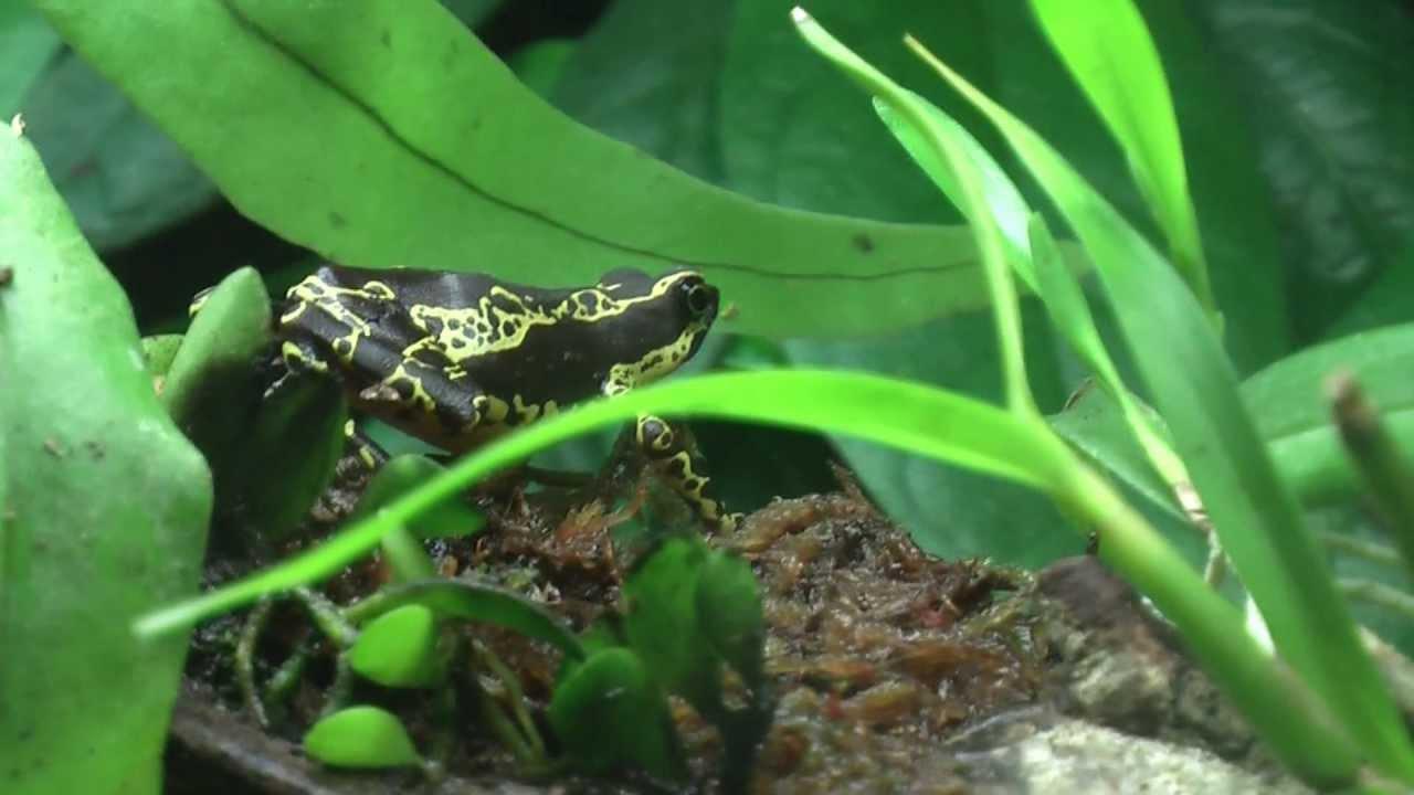 Atelopus Terrarium Met Mini Orchidee Youtube