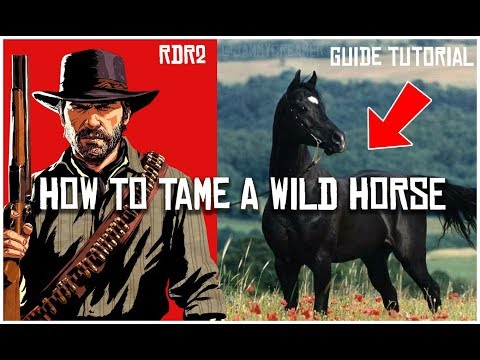 HOW TO FIND TAME AND BREAK A WILD HORSE IN RED DEAD REDEMPTION 2 | GUIDE TUTORIAL