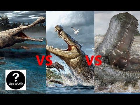 Sarcosuchus vs Deinosuchus vs Purussaurus, con nào sẽ thắng #11 || Bạn Có Biết?