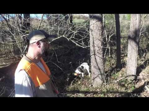 Hunting Pheasants At Sugar Creek Hunting Preserve