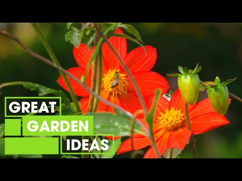 This Garden Is Full of Autumn Colour & Inspiration   GARDEN   Great Home Ideas
