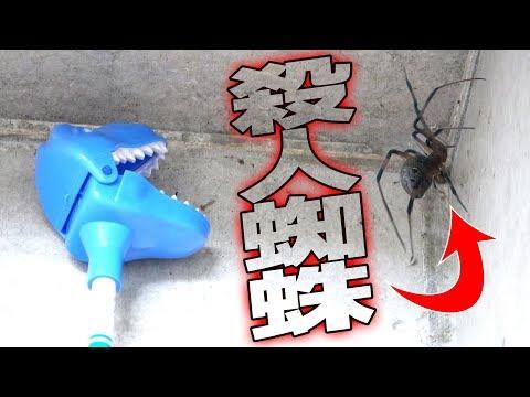 ツイッターで話題の殺人毒蜘蛛を捕えろ!【ハイイロゴケグモ】