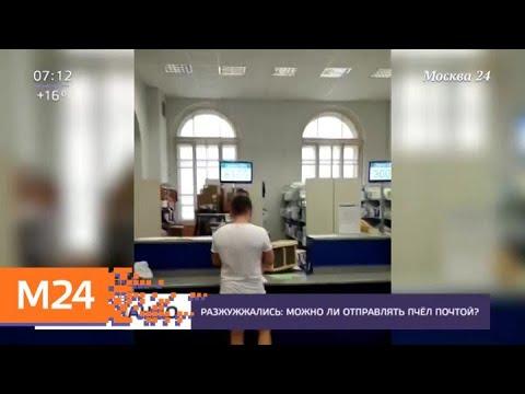 """В """"Почте России"""" появились посылки с пчелами - Москва 24"""