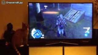 Приколы про кошек Что там за телевизором, подумал кот