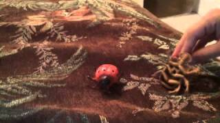 Bugs life episode 1 ladybug and rhino beetle meet