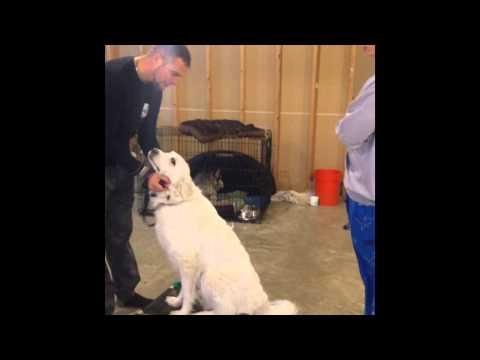 Human and Dog Aggression Dog Training - Fenton, MI