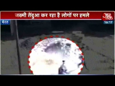 Leopard attack In Meerut Caught On Camera