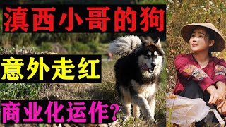 It's an illusion that the net red dog of the western Yunnan brother's house is unexpectedly popular?