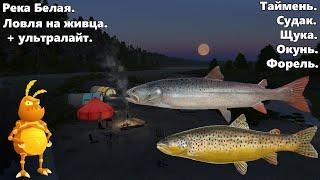 Река белая. Ловля на живца. + ультралайт.  [1440p] Русская рыбалка 4. Russian Fishing 4.