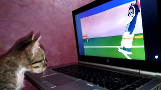 The tiny Kitten Watching Tom And Jerry