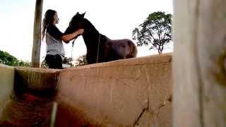 Como colocar o cabresto no cavalo
