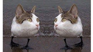 Приколы с котами, Котики и кошки, Смешные видео про котов котят и кошечек 2018
