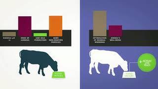 Health care Lesaffre Пробиотики для здоровья животных