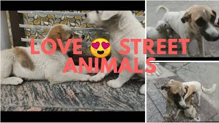 Adopt street dogs | stop buying dog | Love street animals | share this and spread love |mister bagga