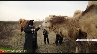 Имам из Чечни открыл ферму по разведению редких животных и птиц